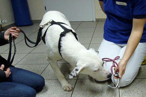 Medical training for dogs and cats - making the vet-visit less stressful for everyone